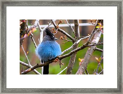 Spring In The Mountains Framed Print by David  Norman