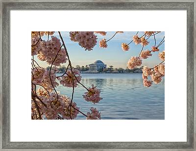 Spring In The Nation's Capital Framed Print by Jared Perry