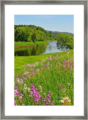 Spring In The North Woods Framed Print