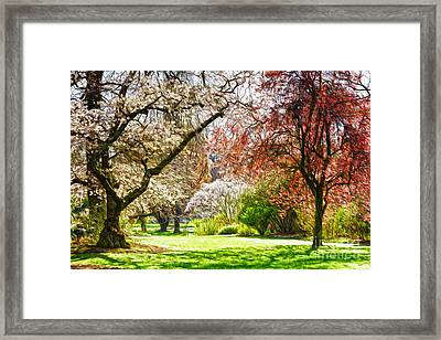 Spring In The Park Framed Print by Colin and Linda McKie