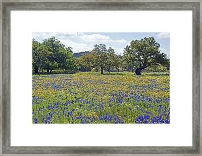 Spring In The Texas Hill Country Framed Print