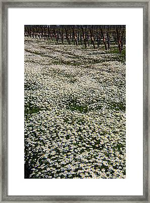 Spring In The Vineyards Framed Print by Garry Gay