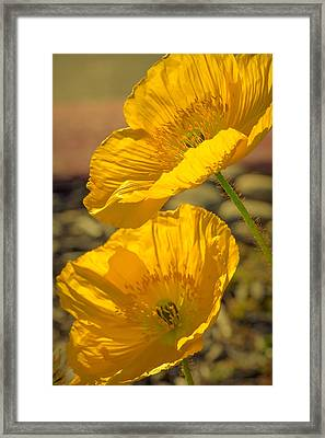 Spring In Yellow Framed Print by Rima Biswas
