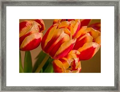 Spring Indoors Framed Print