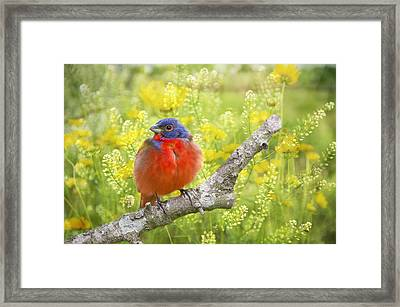 Spring Is A New Beginning Framed Print by Bonnie Barry