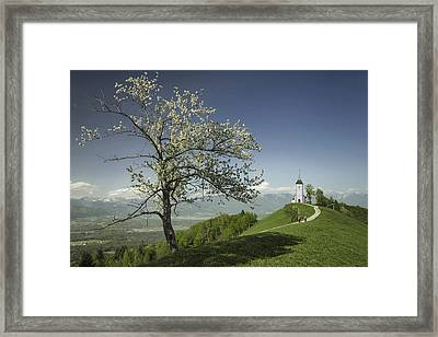 Spring Is Back Framed Print by Robert Krajnc