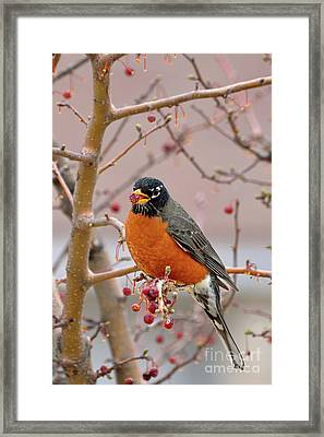 Spring Is Coming Framed Print by Betty LaRue