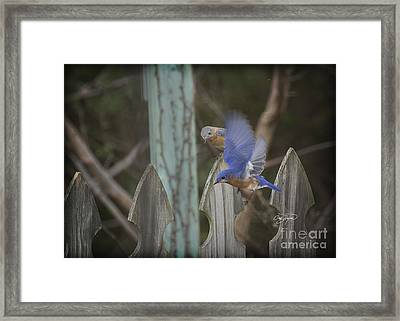 Spring Is Coming I Framed Print by Cris Hayes