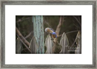 Spring Is Coming II Framed Print by Cris Hayes