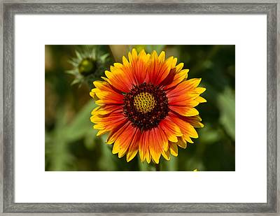 Spring Is Here Framed Print by Gabor Fichtacher