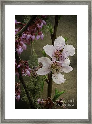 Framed Print featuring the photograph Spring Is Here by Lori Mellen-Pagliaro