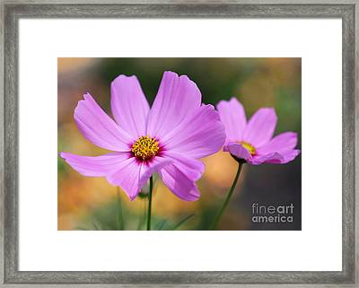 Spring Is Here Framed Print by Sabrina L Ryan