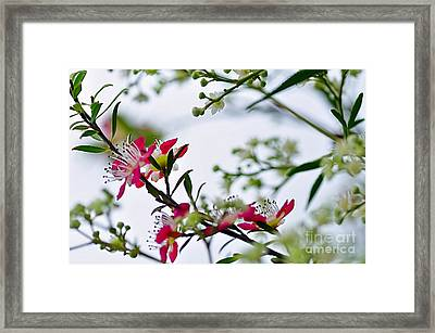 Spring Is In The Air Framed Print by Kaye Menner