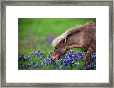 Spring Is In The Air... Framed Print