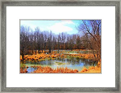 Spring Is In The Air Framed Print by Sheila Werth