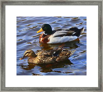 Spring Is In The Air Framed Print by Victoria Sheldon