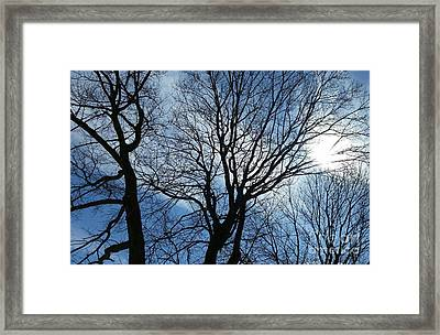 Spring Is In The New England Air Framed Print