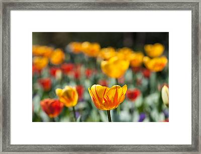 Spring Is Upon Us Framed Print by Nathan Rupert