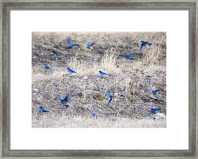 Spring Just Flew In Framed Print