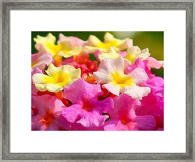Spring Lantana Framed Print by James Hammen
