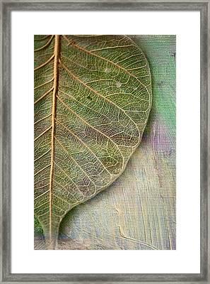 Spring Leaf Framed Print by Bonnie Bruno