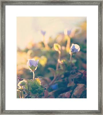 Framed Print featuring the photograph Spring Light And Wildflowers by Candice Trimble