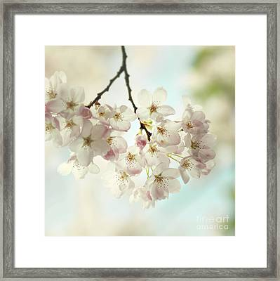 Framed Print featuring the photograph Spring Light by Sylvia Cook