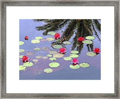 Spring Lilly Framed Print