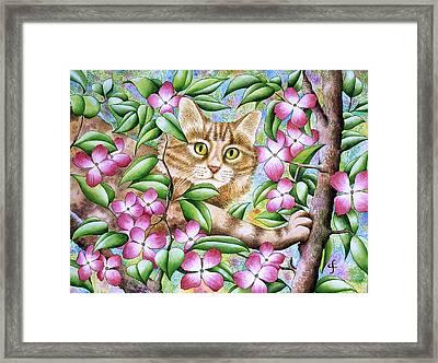 Spring Lily Framed Print by Carolyn Steele