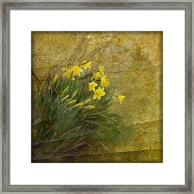 Spring Framed Print by Liz  Alderdice
