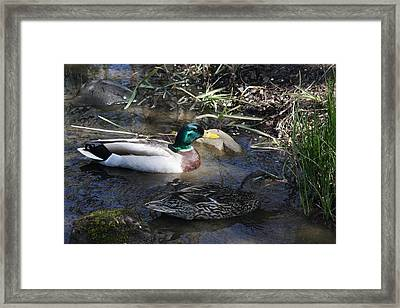Spring Love Family Framed Print by Vadim Levin