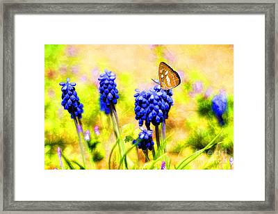 Spring Magic Framed Print by Darren Fisher