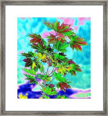 Spring Maple Leaf Design Framed Print
