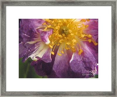Spring Framed Print by Marijo Fasano