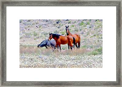Framed Print featuring the photograph Spring by Marilyn Diaz