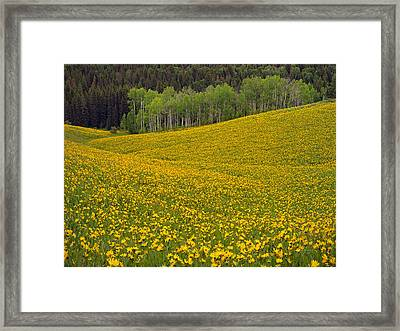 Spring Meadow Framed Print