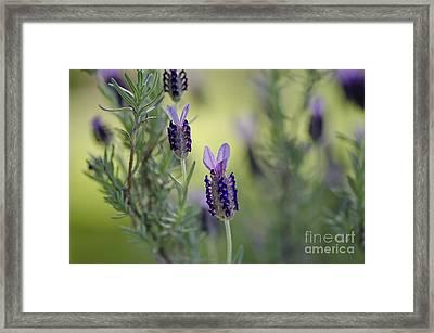 Spring Mint Framed Print