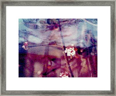 Spring-mirror Framed Print by Dorothy Rafferty
