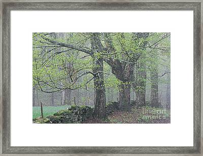 Framed Print featuring the photograph Spring Mist by Alan L Graham