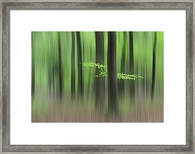 Spring Morning Framed Print by Huib Limberg