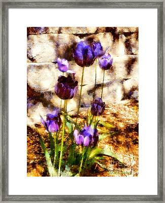 Spring Morning Tulips Framed Print by Janine Riley