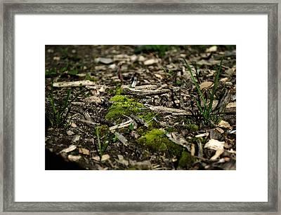 Spring Moss Framed Print