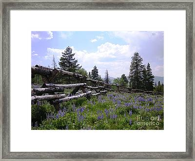 Spring Mountain Lupines 2 Framed Print by Crystal Miller