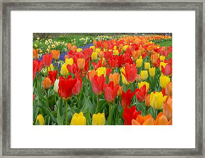 Spring Of Glory Framed Print