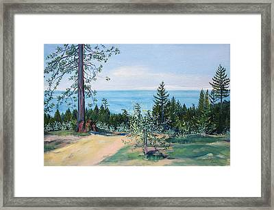 Spring Olive Grove And Pathway To The Sea Framed Print by Asha Carolyn Young