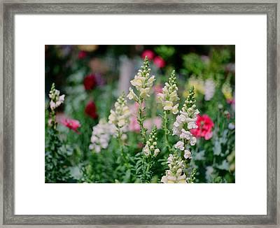 Spring On Film Framed Print by Linda Unger