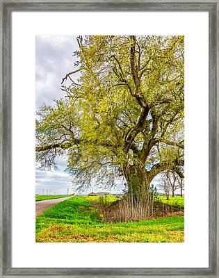 Spring On The Delta 2 Framed Print by Steve Harrington