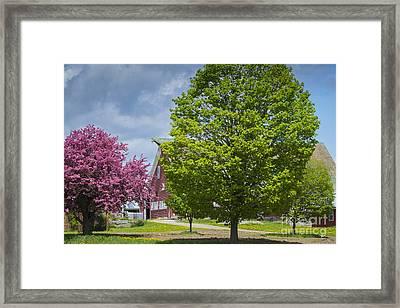 Spring On The Farm Framed Print by Alana Ranney