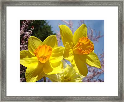 Spring Orange Yellow Daffodil Flowers Art Prints Framed Print by Baslee Troutman
