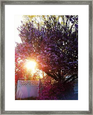 Framed Print featuring the photograph Spring Paradise by Toni Martsoukos